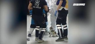 قطة تحمل مولودها لمستشفى يعني بمعالجة الحيوانات يثير جدل رواد التواصل الاجتماعي،بانوراما مساواة،4.5