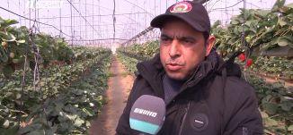 مزارع الفراولة المعلقة في قطاع غزة ،مراسلون،17.2.2019- قناة مساواة الفضائية