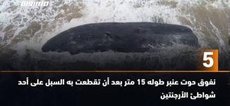 َ60 ثانية-نفوق حوت عنبر طوله 15 متر بعد أن تقطعت به السبل على أحد شواطئ الأرجنتين ،09.08،مساواة