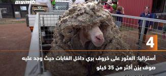 َ60ثانية-أستراليا: العثور على خروف بري داخل الغابات حيث وجد عليه صوف يزن أكثر من 35 كيلو،24.02.2021