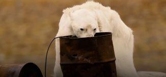 الدب القطبي الهزيل - قناة مساواة الفضائية