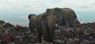 َ60ثانية -سريلانكا:في مشهد مألوف عشرات الفيلة تخرج من الغابة إلى مكب النفايات بحثا عن الطعام25.11