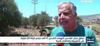 أخبار مساواة : حرائق جبال القدس التهمت أكثر من 17 ألف دونم تاركة آثار كارثية على الطبيعة