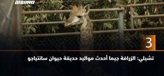 ب 60 ثانية-  تشيلي: الزرافة جيما أحدث مواليد حديقة حيوان سانتياجو  ،20.5.2019