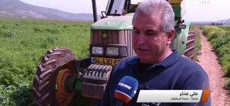 مراسلون مساواة: مزارعو سهل البطوف يتكبدون خسائر بالملايين