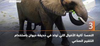 60 ثانية- النمسا: ثانية الأفيال التي تولد في حديقة حيوان باستخدام التلقيح الصناعي،19.7.2019
