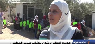 تقرير : موسم قطف الزيتون يجتذب طلاب المدارس ، اخبار مساواة، 1-11-2018-مساواة
